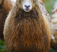How Ewe Doin'? by Stephen J  Dowdell