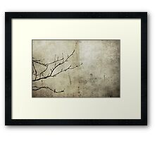 Mountain Ash in Winter Framed Print