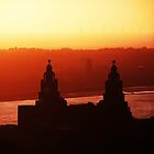 Liver buildings from the Cathedral tower by Paul Madden