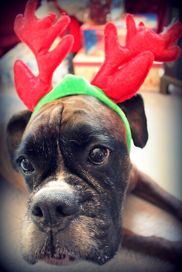 It's That Time Of The Year Again... Bah Humbug... by Evita