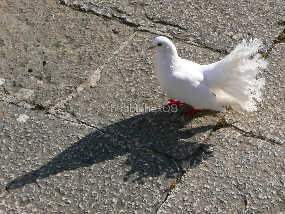 White dove at Montecassino by bubblehex08
