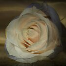 Pretty Rose by Nicole  Markmann Nelson