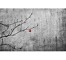 Christmassy Mountain Ash Photographic Print