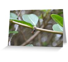 Spider and Prey Greeting Card