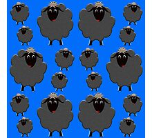 A whole flock of Black Sheep Photographic Print