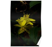 Yellow Rush Lily Close Up Poster