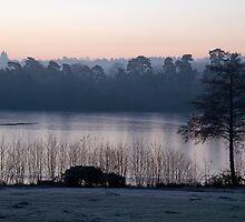 Dawn Light by Sue Robinson
