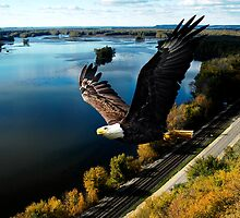 Eagle over the Mississippi River by Randy Branham