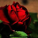 Blood Red Rose by Evita