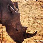 Rhino by LKPhoto