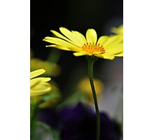 Tall Yellow Flower Photographic Print