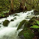 Susuki River by Skye Hohmann
