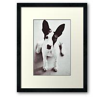 Coco Framed Print