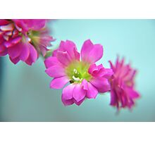 Magenta Flower, Turquoise Background Photographic Print