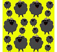A whole herd of Black Sheep Photographic Print