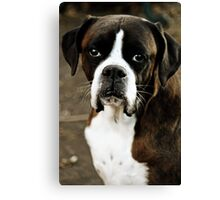 Arwen's Portrait -Boxer Dogs Series- Canvas Print