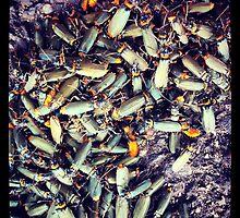 Bug off! by kturner07