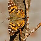 Butterfly on Branch by retroboho