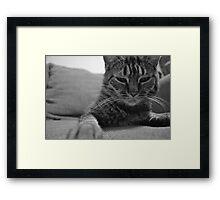 Feline Love Framed Print