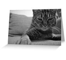 Feline Love Greeting Card