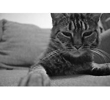Feline Love Photographic Print