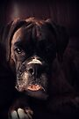 Portrait Of A Female Boxer - Boxer Dogs Series by Evita