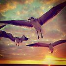 Gulls  by Dev7in