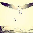 Seagulls  by Dev7in