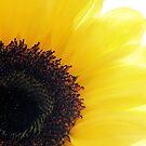 Sunflower Shine by Sharon Woerner