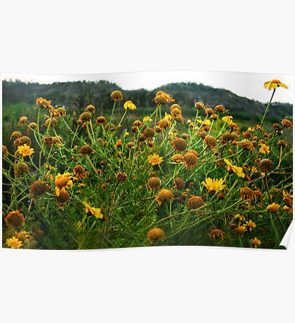 Daisies By The Road Poster