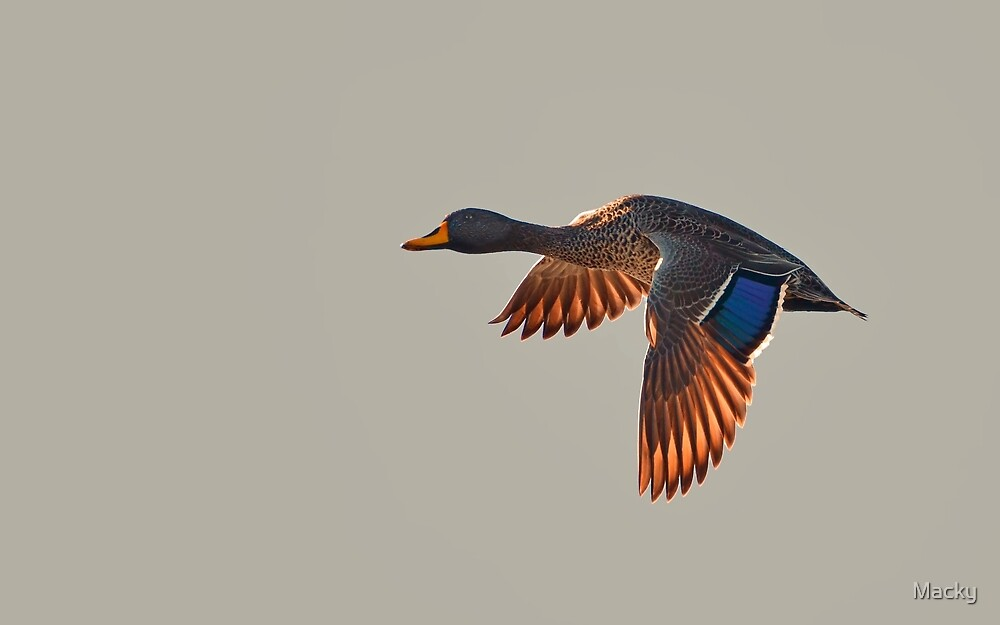 Fleeting Flight by Macky