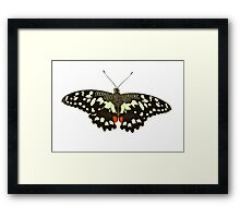 Lime Swallowtail Framed Print