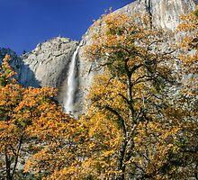 Yosemite National Park - California by Mary Warner