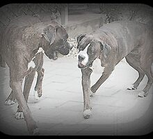 The Way We Were - Boxer Dog Series by Evita