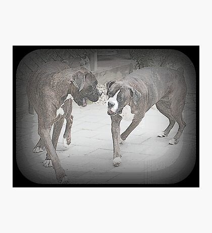 The Way We Were - Boxer Dog Series Photographic Print