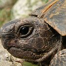 Tortoise Portrait: Macro  by taiche