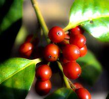 Berries version 2 by Cranemann