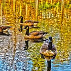Golden Goose Lake by Cranemann
