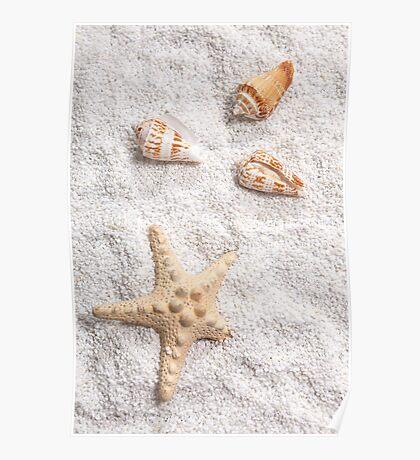 sea shells Poster