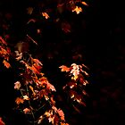 Autumn by night by Cédric Charbonnel