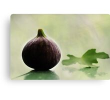 Fig Leaf Canvas Print
