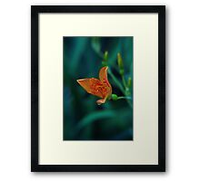 Tiger Lily with Water Drop Framed Print