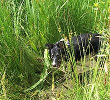 Dirty Wet Dog by Karla Brading