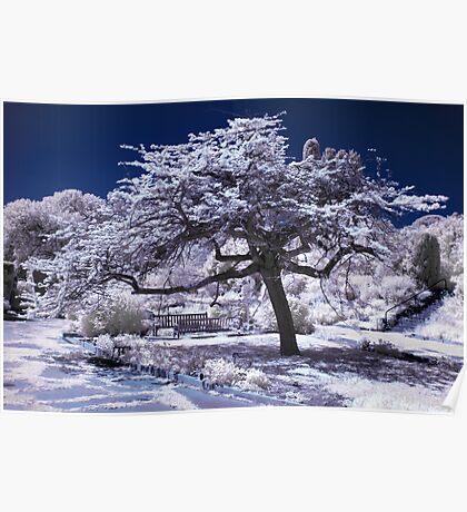 Infrared japanese tree Poster
