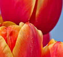 Tulips in the sky Sticker