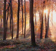 Woodland Sunburst by Photokes