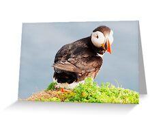 Shetland Puffin Greeting Card