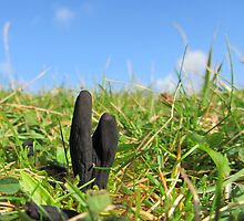 Earth tongue fungus by flips99