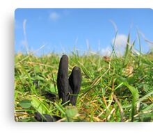 Earth tongue fungus Canvas Print