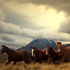 Four Horses by Arla M. Ruggles